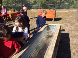 3rdGradeGardenBeds